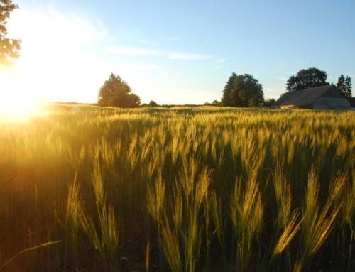 Lõuna-Eesti loodus ja kultuur