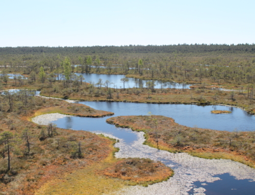 Bog shoe hike in Männikjärve bog in the Endla Nature Reserve